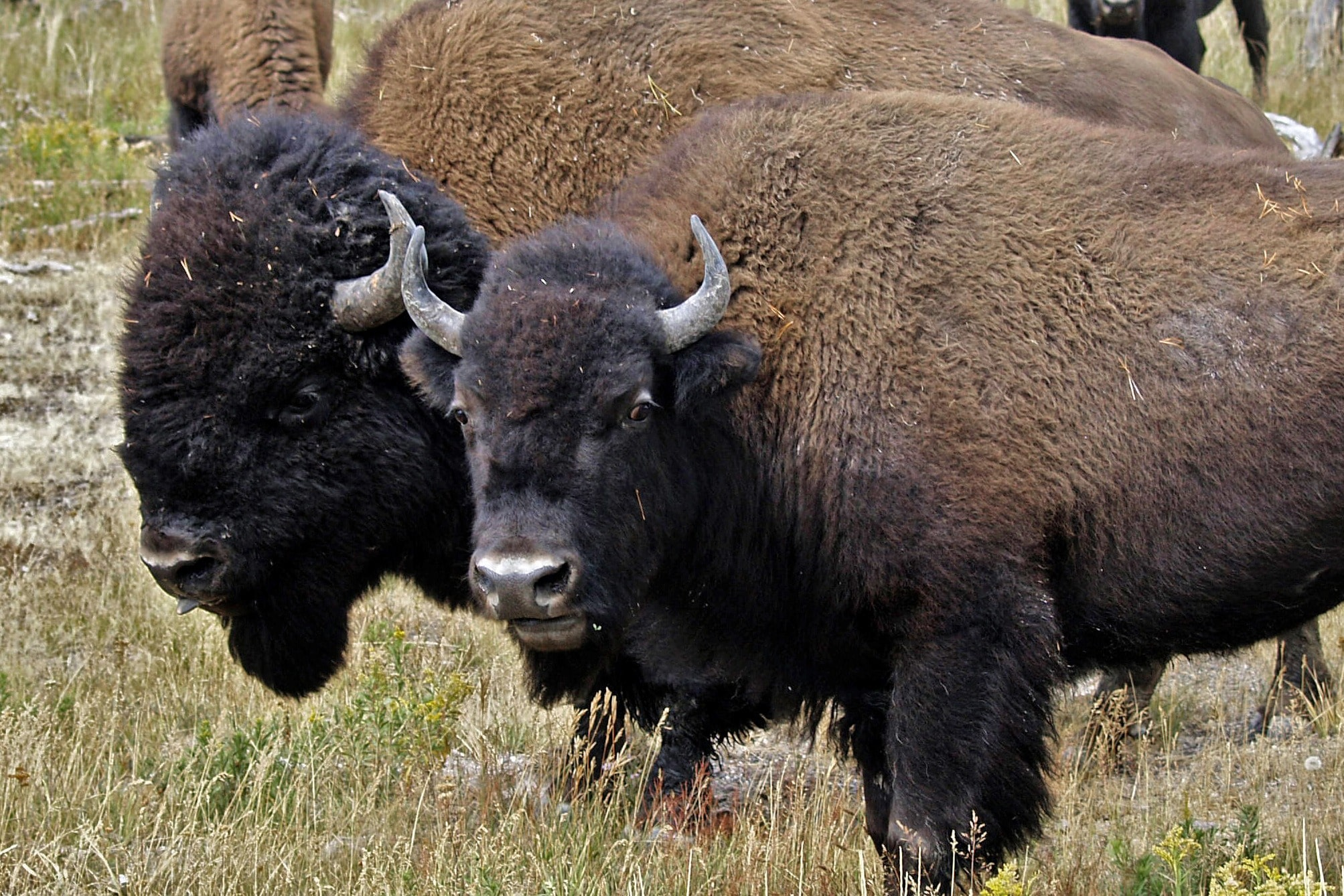 Beck & Bulow Your Ethical Source For Buffalo Meat - Beck and Bulow