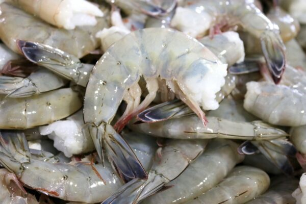 Wild Blue Mexican Shrimp